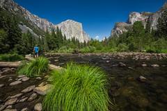 View up Yosemite Valley in Yosemite National Park (Lee Rentz) Tags: elcap valleyview america california elcapitan mercedriver mountainous mountains nationalparkservice northamerica river rocky sedge sedges sierra sierranevada stream usa yosemite yosemitenationalpark yosemitevalley