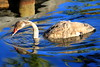 Explore the River (Kenny Teo (zoompict)) Tags: park blue light lake reflection water beautiful canon wonderful river lens photo yahoo duck google scenery photographer waterfront view ripple wave best explore kenny swam eos1000d zoompict