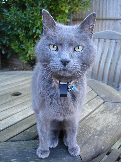 Henrycat recuperates (4)
