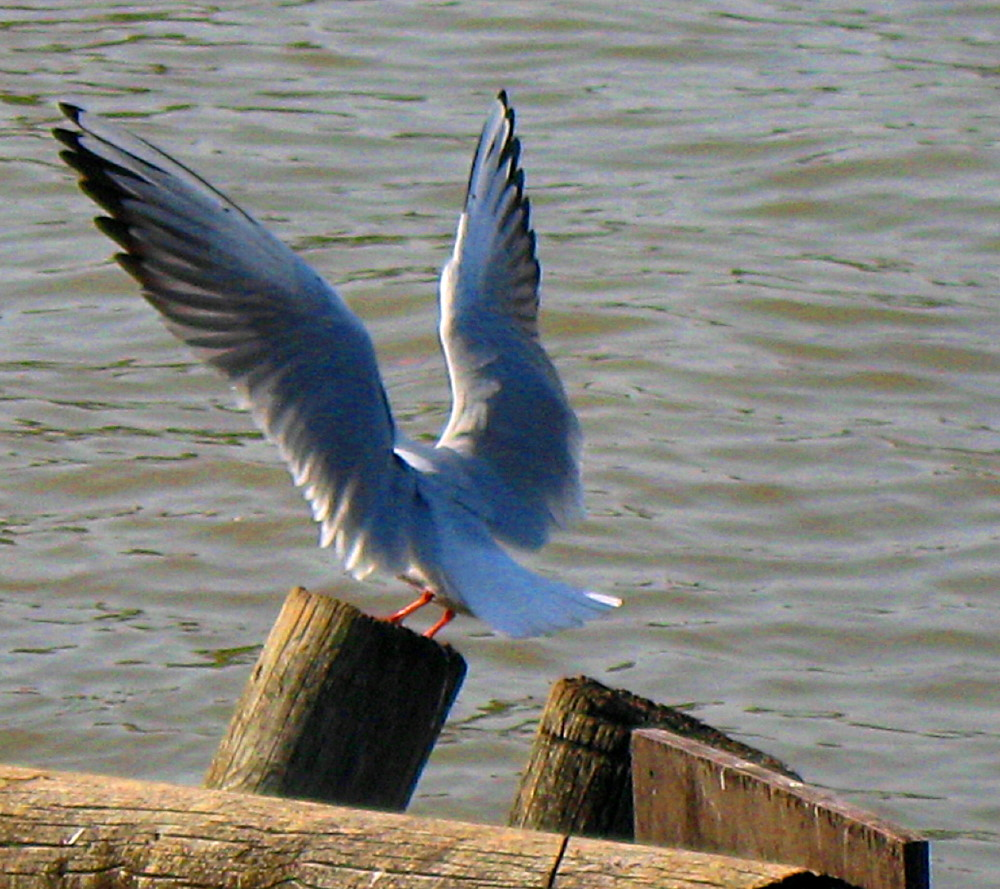 29-01-2011-wings5