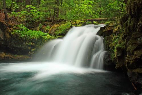 [フリー画像] 自然・風景, 森林, 滝, アメリカ合衆国, オレゴン州, 201102031900