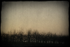 On a  winter afternoon (manganite) Tags: trees winter sunset sky color texture photoshop vintage catchycolors germany dark landscape geotagged evening iso200 nikon colorful europe bonn seasons dusk framed overlay frame nrw d200 f56 vignette textured lightroom northrhinewestphalia nikond200 ttv 2875mmf28 manganite colorefexpro filterforge 1640sec date:day=30 date:month=januar 1640secatf56 geo:lon=7173064 geo:lat=50657011 date:year=2011