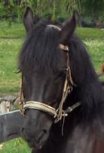 Reiterhof Saltner Edelweiss - Albergo maneggio Saltner Edelweiss (Reiterhof Edelweiss) Tags: pony pferde cavalli wandern edelweiss reiten sdtirol altoadige haflinger sangenesio gite asini maneggio jenesien equitazione calesse trentinoaltoadige ponyreiten reiterhof eselreiten cavalcare reitunterricht reiturlaub reiterferien reiterurlaub escursioniacavallo saltner reiteninsdtirol passeggiateacavallo reiteninjenesien wanderulaub eseltrekking ausritte kutschenfahrten giteincalesse ferieacavallo