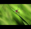 The Aliens are Here ! (Harvarinder Singh) Tags: macro nature canon wildlife insects ufo aliens canon2470mm canoneos5dmarkii harvarindersinghphotography harvarindersingh withoutmacro