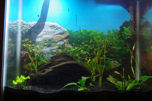 aquarium tank background driftwood aquatic planted