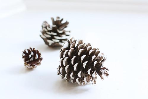 winterpinecones