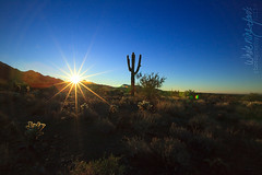 Scottsdale desert sunrise (w9yphotography) Tags: family blue arizona sky sun mountain sunrise photographer desert earth houston az catus scottsdale sunflare wholenineyards flickrchallengegroup whole9yards wholenineyardscom wholenineyardscomphotography