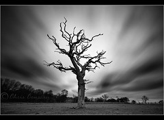 Sleepy Hollow........? (Chrisconphoto) Tags: longexposure blackandwhite bw tree field clouds movement farmer sthelens sleepyhollow chrisconway mossbank weldingglass