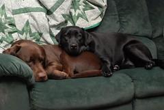 Tucker & Nala