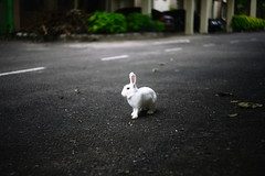 white guy (jebatderhaka88) Tags: rabbit animals canon lens focus malaysia 5d f2 manual russian potrait 58mm helios kemaman jebatderhaka88