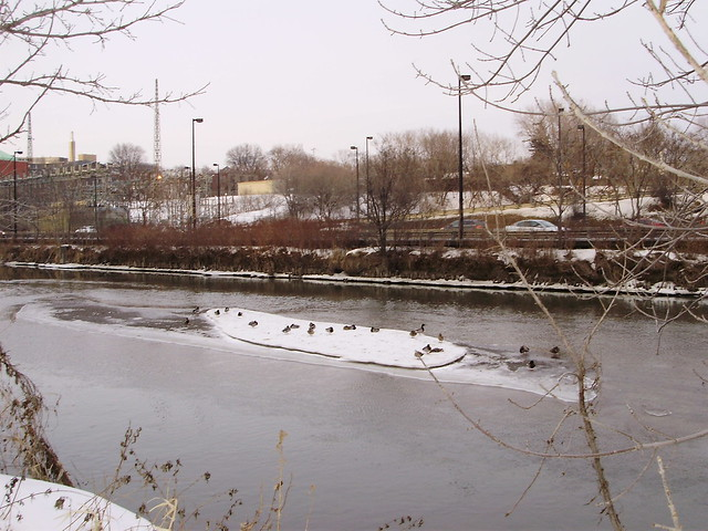Duck Party on Ice, Don River, Toronto