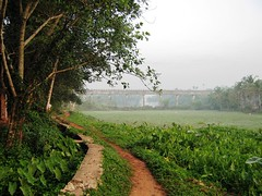 Chovva (tpms5) Tags: green malabar kannur greenearth cannanore chovva edachovva malabarmagazine thegreenearth