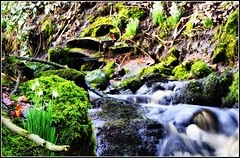 Snowdrop Falls (CamraMan.) Tags: streams waterform waterfalls waterfall water southwestscotland sonyalpha sony sonyalphadslra200 scotland scottishborders picnik ngc nbw naturewatcher naturesgreenpeace natureplus natureitsbest nature gilnockiebridge h20 esk dslr canonbie camera becks banks alpha a200 ©camaman ©davidliddle