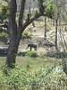 100_0068 (travellersai) Tags: kerala treehouse wayanad teaestate wildboar bandipur chital vythri banasuradam soojiparafalls streamvalleyresorts