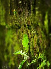 green on green (e.nhan) Tags: light flower art nature closeup colours dof bokeh backlighting enhan