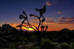 One Colorful Sunset in Joshua Tree (Dave Toussaint (www.photographersnature.com)) Tags: world california ca travel light sunset vacation sky orange usa cloud sun nature canon landscape photo nationalpark rocks colorful glow desert picture joshuatree photographers calif nights geology 2009 hdr mojavedesert 1001 trekker 40d topazlabs topazadjust topazdenoise photographersnaturecom davetoussaint davetoussaintcom photoengine oloneo flickrtravelaward