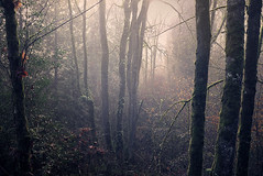 Troncs (sparth) Tags: seattle leica trees fog forest washington december foggy redmond foret brouillard willows rd mousse x1 2010 troncs willowsroad leicax1