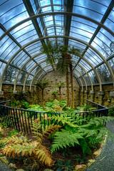 Inside the Benmore Fernery (duncanreddish) Tags: rock garden scotland moss nikon argyll victorian fisheye botanic ferns peninsula 8mm glasshouse hdr dunoon fernery rbge benmore cowal d90