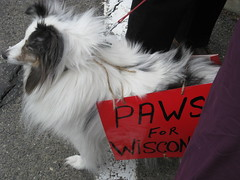 Wisconsin SIEU support rally February 2011 020
