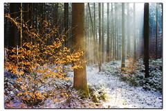 Bunter Winterwald (Helmut Reichelt) Tags: leica schnee winter germany deutschland bavaria natur oberbayern landschaft sonne wald m9 geretsried colorefexpro