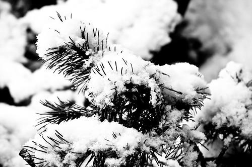 Snow end Feb 018-2
