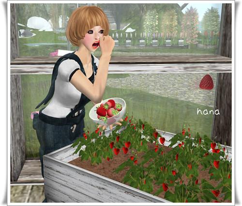 ::frog's garden::
