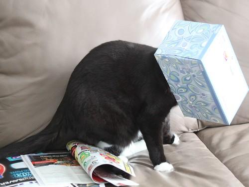 Kleenex Head Cat