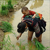 International Women's Day (NaPix -- (Time out)) Tags: portrait asia southeastasia day rice paddy mother vietnam international planting sapa hmong women's napix