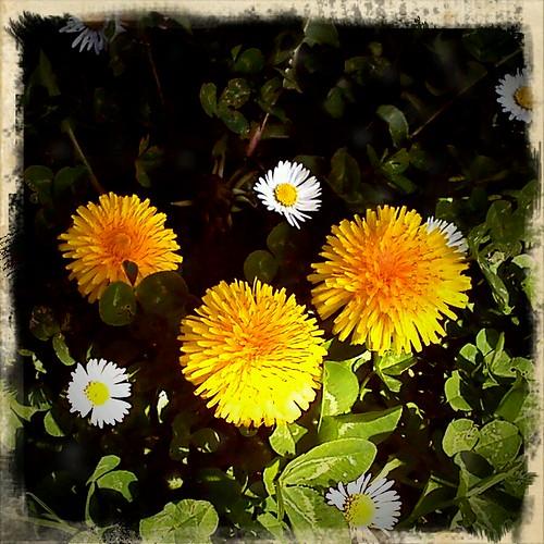Pinceladas de una primavera anticipada by aavecma