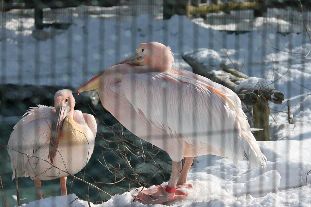 Sapporo Maruyama Zoo (19)