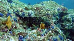 Los Arcos Reef (Silent World Divers) Tags: febrero2011 silentworlddiverssnorkeling