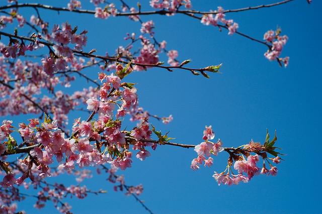 早春の色彩