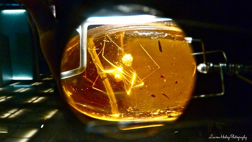 A spider trapped in amber, this photo's taken looking through a magnifying glass about the size of a 10p coin