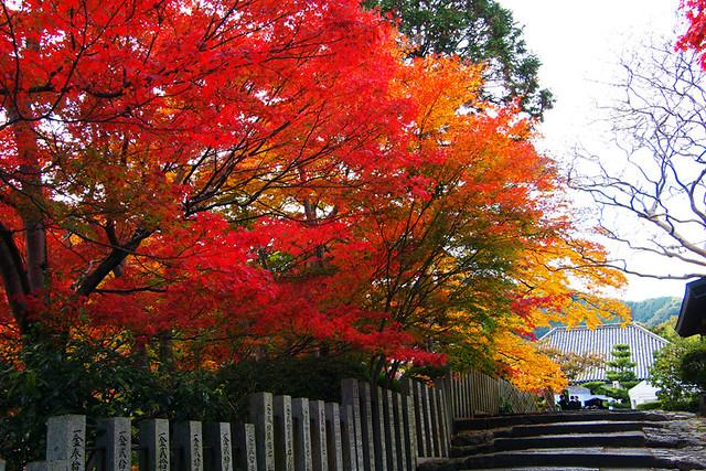 20101118_135814_當麻寺