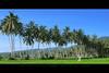 Waris Terakhir (AquariusVII) Tags: green malaysia padi tj kelapa terengganu maras petani d80 2551 aquariusvii photophobiaz tamronsp1024mm13545 tjlens tjlenspicture