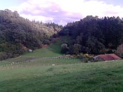P171010_17.28 (naialaka) Tags: natura basoa belarra baserria berdea paisajea