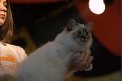 DSC_0101 (Francesco_Fontana) Tags: cat kat chat gato katze mace  macska gatto  con kot gat koka kedi kass katt kissa kttur maka kucing pusa mo   kat     pisic  qattus   kais