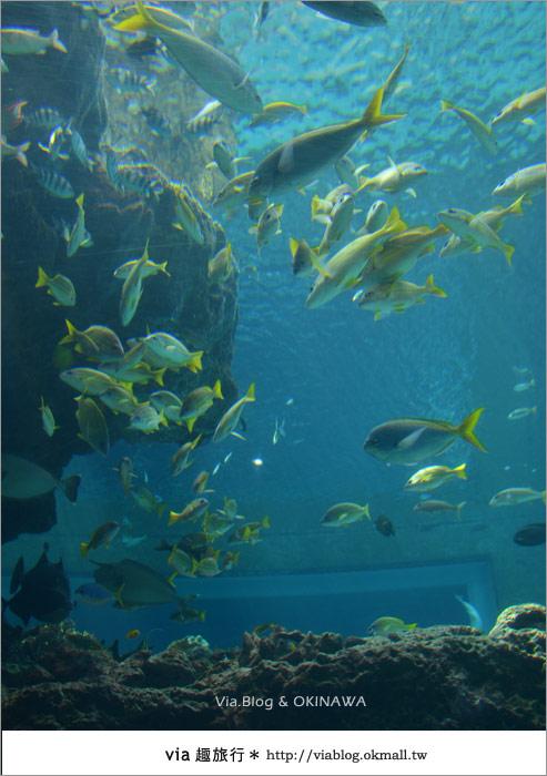 【沖繩景點】美麗海水族館~帶你欣賞美麗又浪漫的海底世界!12