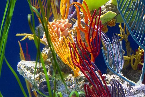 aquarium_10