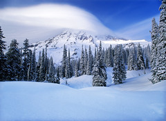 Mt. Rainier Winter Wonderland (David Shield Photography) Tags: trees winter sky mountain snow color clouds peak washingtonstate mtrainier mtrainiernationalpark bestcapturesaoi elitegalleryaoi