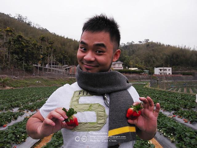 大湖草莓之旅 - 大力推薦 大山農園 R1039324