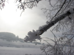 snow-covered branch (ruthug08(on and off)) Tags: schnee winter snow hiver nieve neve invierno neige inverno zima kar salmendingen snieg