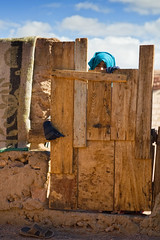 Curiousity With Caution (Olga Gray) Tags: door sky color girl vertical wooden village hand head gates egypt caution glove tribe curiosity sinai settlement bedouin muszeina