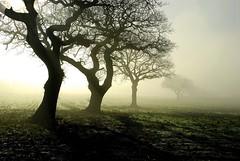 Trees in the fog (tjmarlowd80) Tags: nikon taken using d80