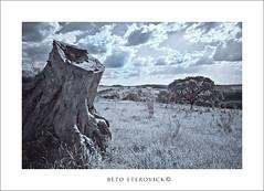 IMG_7148 (BetoEterovick) Tags: wood sky tree nature clouds landscape ir cut natureza paisagem cu nuvens infrared tronco rvore cokin cortada betoeterovick
