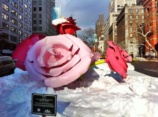 Will Ryman: The Roses