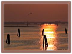 un ponte sul riflesso (erman_53fotoclik) Tags: tramonto volo laguna pali acqua gabbiano chioggia riflesso veneto bricole