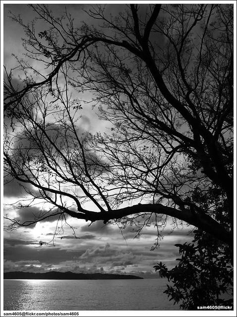 Pohon di tepi pantai