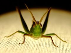 Saltamonte #2 (iohandesign) Tags: insectos nature fuji bugs fujifilm bichos hopper s200 grashopper grasshoper hoper erx saltamonte tucura