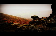It roams and it prowls on Dartmoor (Dazzygidds) Tags: uk england walking devon lichen dartmoor widecombeinthemoor dartmoornationalpark graniteoutcrops mossytrees twomoorsway thewestcountry bonehillrocks cafeonthegreen britishnationalparks chinkwelltor honeybagtor b3387 bonehillvillage
